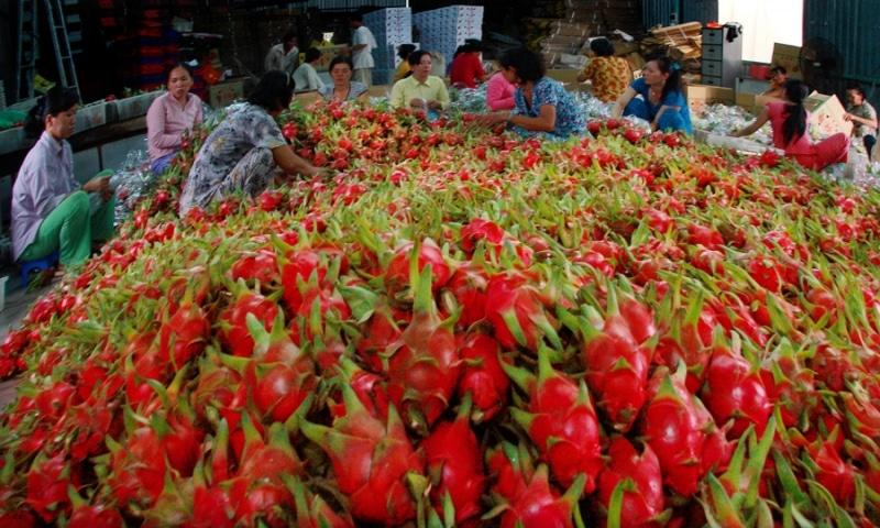 Thanh long Bình Thuận